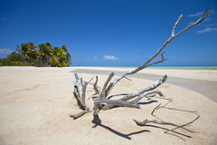 Deadwood on white sand beach and palm tree Stock Photos