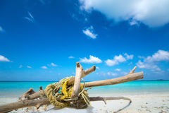 Deadwood on white sand beach  of paradise island Stock Images