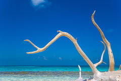 Deadwood on white sand beach  of paradise island Royalty Free Stock Photography