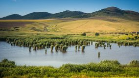 Dealurile Bestepe - delta de Danúbio - Romênia fotos de stock royalty free