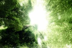 Deam forest. Dream forest with sunray in nature Royalty Free Stock Photography