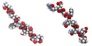 Deamidated glutenpeptide allergeen. Stock Fotografie