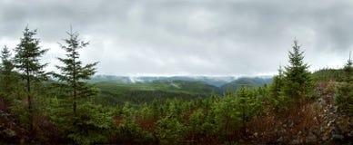 Deap skogpanorama - Reforestation Arkivbilder