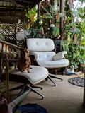 Dear old dog on stool of recycled chair stock photos