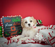 Dear Santa. Funny little Christmas puppy tearing up a Christmas gift laying next to a sign the reads Dear Santa, Please define good on a red background Stock Photography