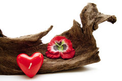 Dear symbol with tree root Royalty Free Stock Photo