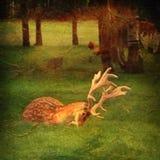 Deer in the woods Stock Image