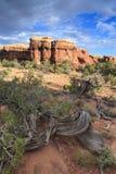 Deard树和不祥之物在峡谷地国家公园 免版税图库摄影