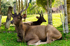 Dears em natural Fotos de Stock Royalty Free