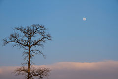 Deat drzewo i księżyc Obrazy Stock