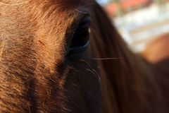 Detail of horse head royalty free stock photos