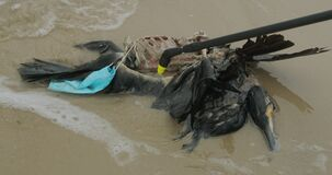 Death of birds, environmental disaster at sea.