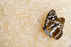 The  death butterfly Stock Photography