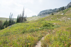 Death Canyon in Grand Teton National Park. A trail runs through a meadow in Death Canyon in Grand Teton National Park in the Rocky Mountains in Wyoming stock photo