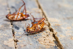 Death cockroach stock photos
