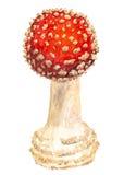 Death cup mushroom Stock Image