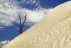 Death in Death Valley Royalty Free Stock Photography