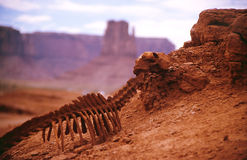 Death desert. Death of the animal in a hot desert of america Royalty Free Stock Photos