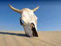 Death in the Desert. Death in the sand  Desert,concept Stock Image