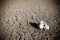 Death at the desert. Human skull at the desert. Drought and cracked soil Stock Image