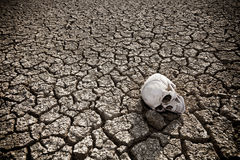 Death at the desert. A human skull at the desert royalty free stock photos