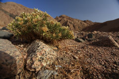 Death desert Royalty Free Stock Photo