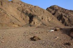 Death desert Royalty Free Stock Photography