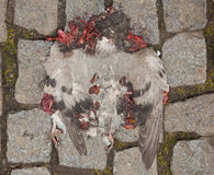 Death Dove on the street Stock Photography