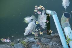 Death fish. In diety water Stock Photos