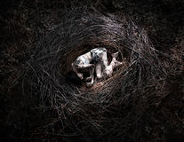 Death in the forest, girl in the nest Stock Photos
