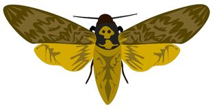 Death-head Hawkmoth Royalty Free Stock Photography