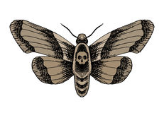 Death head moth Stock Images