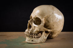 Death human skull. The death human skull as stil life ideal for art and other purposes Royalty Free Stock Images