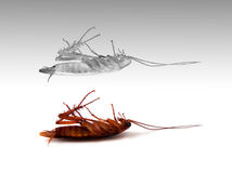Death insect cockroach with spirit out of body experience Stock Photography
