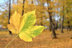 Death leaf Royalty Free Stock Images