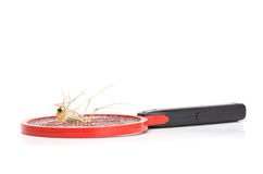Death mosquito on mosquito swatter Royalty Free Stock Photography