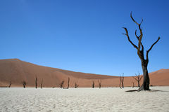 Death in the Namib Desert. Dried up lakebed in the Dead Vlei section of the Namib Desert in Sossusvlei, Namibia Stock Images