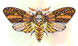 Death`s-head hawkmoth. Stock Photos