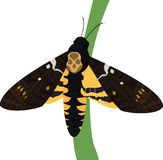 Death`s-head moth on white background. Death`s-head moth isolated on white background. Vector illustration Stock Images
