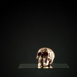 Death Skull Stock Images