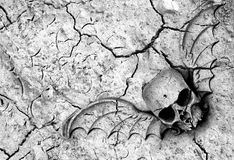 Death in soil. Drought means death in many parts of the world. Winged skull and cracked ground in black and white Stock Photo