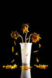 The Death of a Sunflower Royalty Free Stock Photography