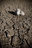 Death t the desert. A human skull at the desert on cracked land royalty free stock photos