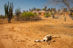 The Death in Tatacoa desert in Colombia. The Death in Tatacoa desert, the driest place in Colombia Royalty Free Stock Photo