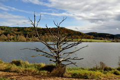 Death tree in autumn royalty free stock photo
