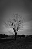 Death tree during in black and white Stock Image