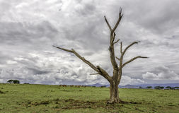 Death Tree Royalty Free Stock Photography