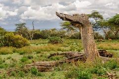 Death Tree Stock Image