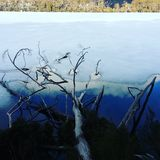 Death tree in frozen lake. No filter, good reflections, Death tree in frozen lake Stock Photo