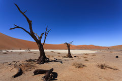 Death tree Hidden Vlei Royalty Free Stock Images